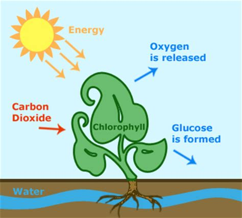 Essay about carbon cycle